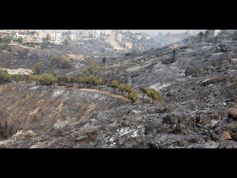 104 حرائق تلتهم لبنان من شماله إلى جنوبه  - نشر قبل 4 ساعة