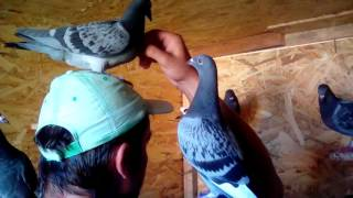 WHY is important to have your birds tame ? Watch This ! ! !