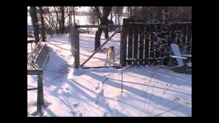 Winter Solar Heated Chicken Coop And Low Tunnel Tour.wmv