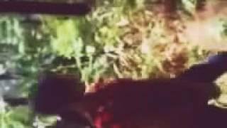 Download Video Lagi Lagi Jepara  setelah #Save Aqua sekarang #Save Pinus   #Viralkan MP3 3GP MP4