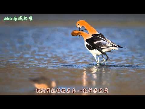 Auld Lang Syne 友谊地久天长  cover: yuanyuan88 动物世界摄影