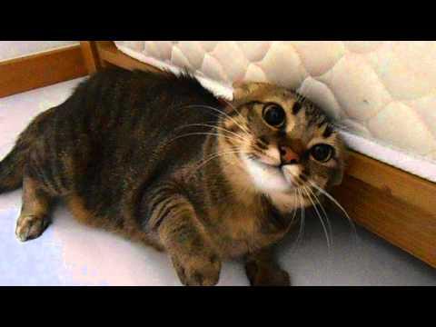 My jealous kitty
