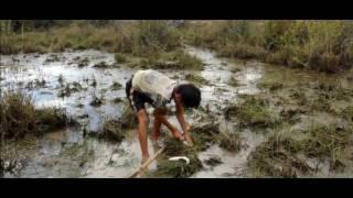 Mantap! Bocah Kecil Tangkap Ikan Dengan Tombak Bambu
