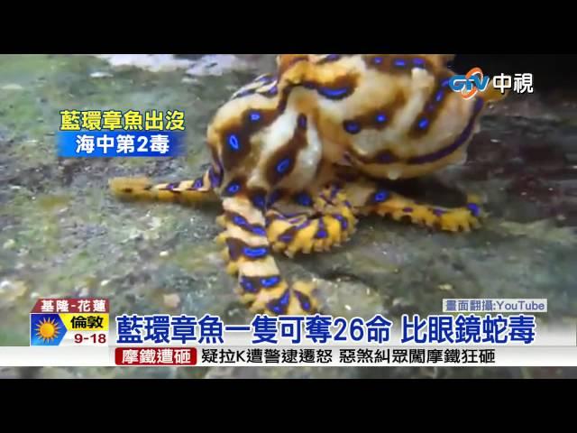 【中視新聞】恐怖海怪!劇毒藍環章魚 東北角出沒20150608