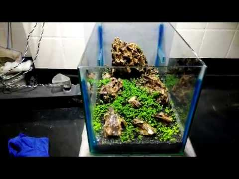 planted aquarium tank update carpet seeds tank 2018 youtube