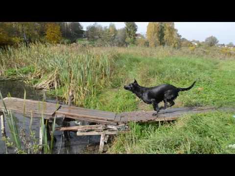 видео: Бомон Росс Евразия. Как я с мостика ныряла...
