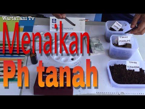 Ph Tanah Cara Uji Ph Tanah Cara Menaikan Ph Tanah (ph Soil Test)