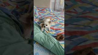 Padaczka-epilepsja u psa