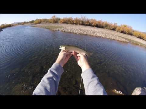 Arizona Bass and Trout Fishing on the Lower Salt River