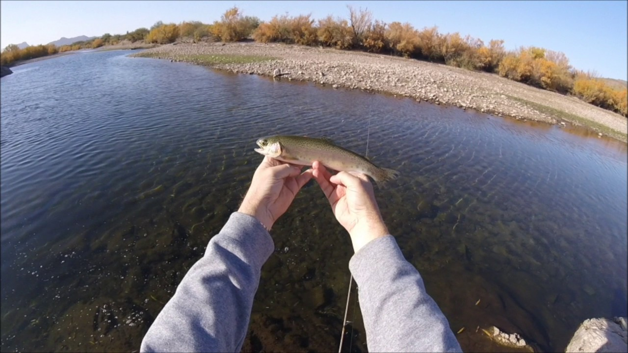 Arizona bass and trout fishing on the lower salt river for Lower salt river fishing
