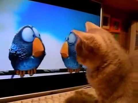 Знаю, что ненастоящие птички, но как бороться с инстинктом? А, ну их! Кот Сережа.