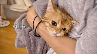 초보집사의 고양이목욕 …