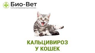 Кальцивироз у кошек. Ветеринарная клиника Био-Вет.