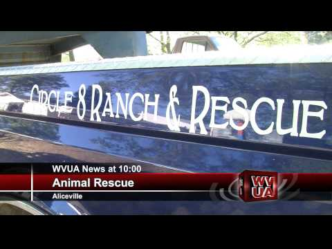 Ponies Rescued In Pickens County