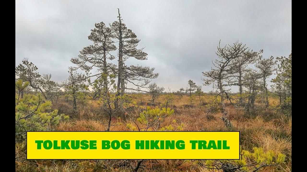 Tolkuse Bog Trail / Tolkuse raba matkarada - Estonian Nature