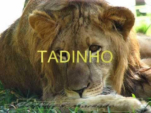 TADINHO DO LEÃO (FEITO POR TONY VASCONCELOS)