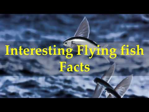 Interesting Flying Fish Facts