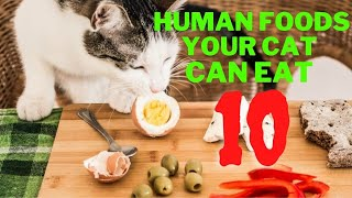 10 Human Foods Your Cat Can Eat 2021