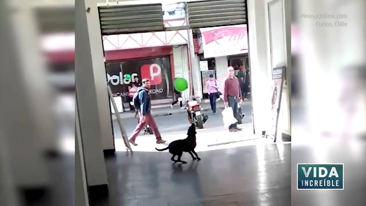 Viral - Perro callejero se divierte con globo