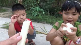 So Sánh Củ Hủ Dừa 1 Năm Và Củ Hủ Dừa 60 Năm Loại Nào Ngon Hơn [ FPL CHANNEL ]