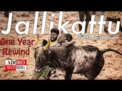 Jallikattu Protest | One Year Celebration | Unseen Special Moments | Adoro Multimedia | Coimbatore