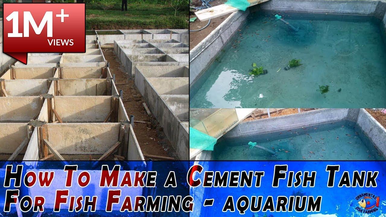 How To Make A Cement Fish Tank For Fish Farming Aquarium Fish Tank