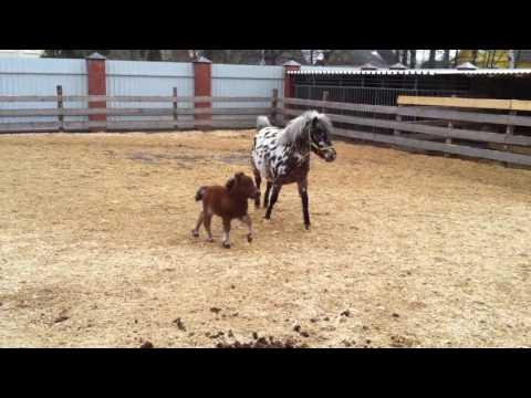 Лошади в Симс 3 Питомцы (Большая обзорная статья о лошадях