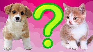 Тест! Какое животное тебе подходит! Тесты для детей онлайн!