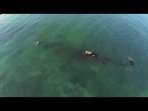 Alkimos SS Shipwreck - Paradis Apartments