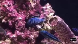 TITANIC meubel met een Heevis zoetwater aquarium