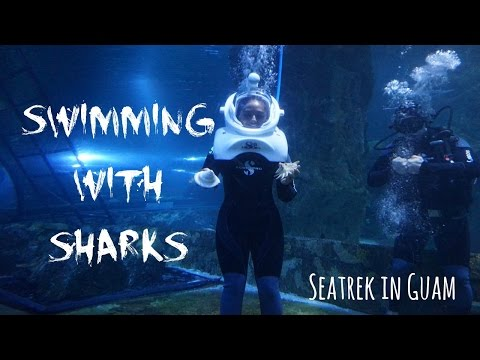 Swimming with Sharks SeaTrek in Guam