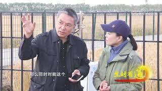 《生财有道》 20191206 咱们家乡有特产 鸭绿江畔稻谷香| CCTV财经