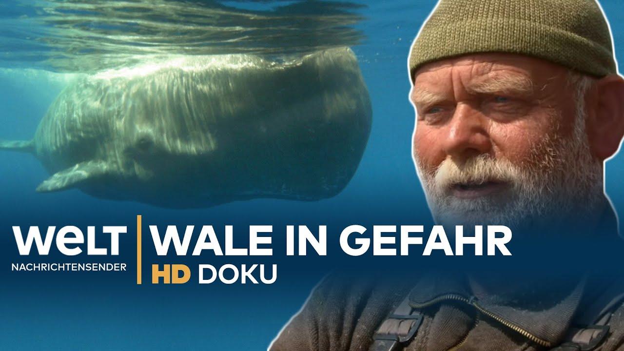 Doku Wale
