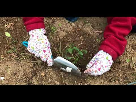 How to Garden for Beginners!!!