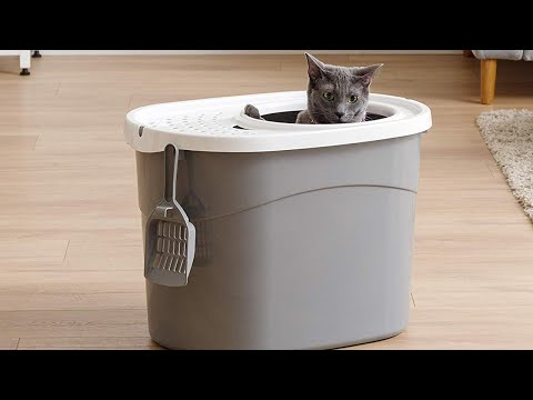 Top 5 Best Litter Boxes For Cats To Buy In 2020