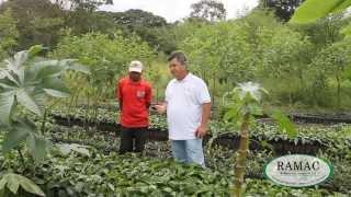 Fase Viveros y Transplante - Programa de nutrición y sanida...