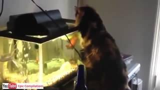 Najlepsze filmy  Śmieszne Koty czyli Kocie Figle 33