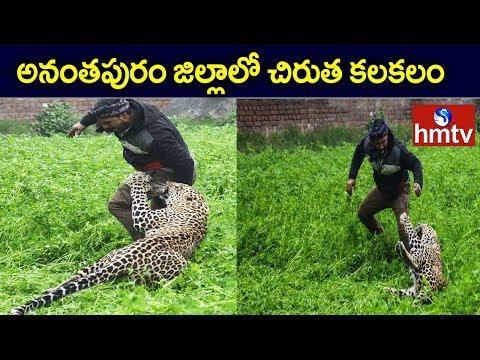 Leapord Hulchul In Ananthapur District  hmtv Telugu  News