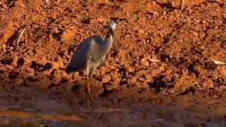 природа Австралии HD