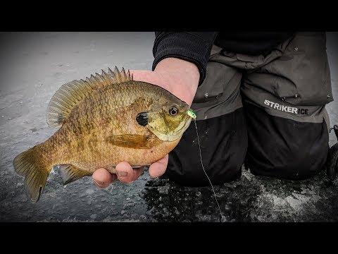 Monster Ice Bluegills - In-Depth Outdoors Season 12, Episode 3