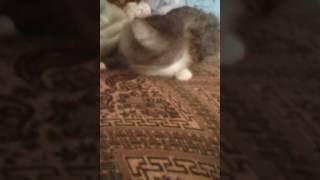 Моему коту плохо...