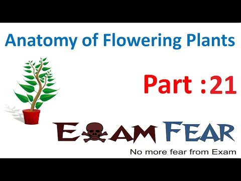 Biology Anatomy of Flowering Plants part 21 (Secondary vs primary growth) CBSE class 11 XI