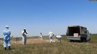 Азия антирекорд смертности от коронавируса