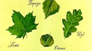 Для чего деревьям листья? Для детей