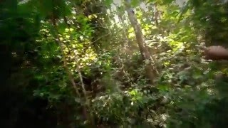 bangladeshi Bear Grylls Man vs Wild HD video 2016 (part 2)