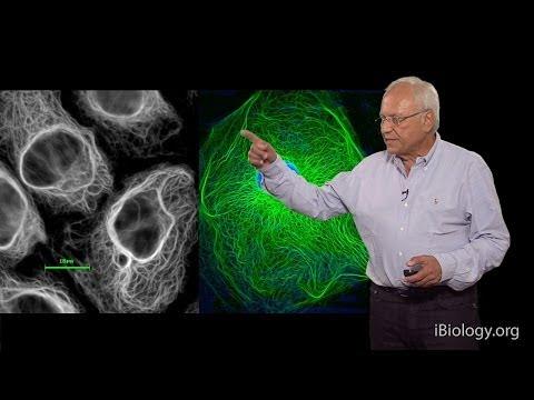 Robert Goldman (Northwestern U/MBL) Part 1: Cytoskeletal Intermediate Filaments