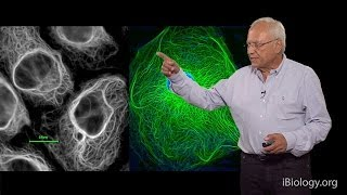 Robert Goldman (Northwestern U/MBL) Part 1: Cytoskeletal Intermediate Filaments