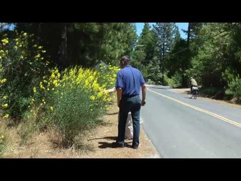 Beautiful shrub is ecological problem in California
