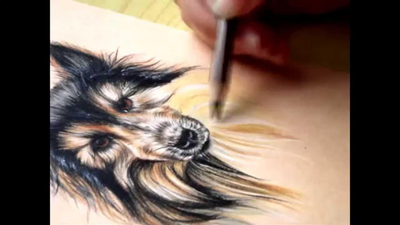 How To Draw Fur Colored Pencils