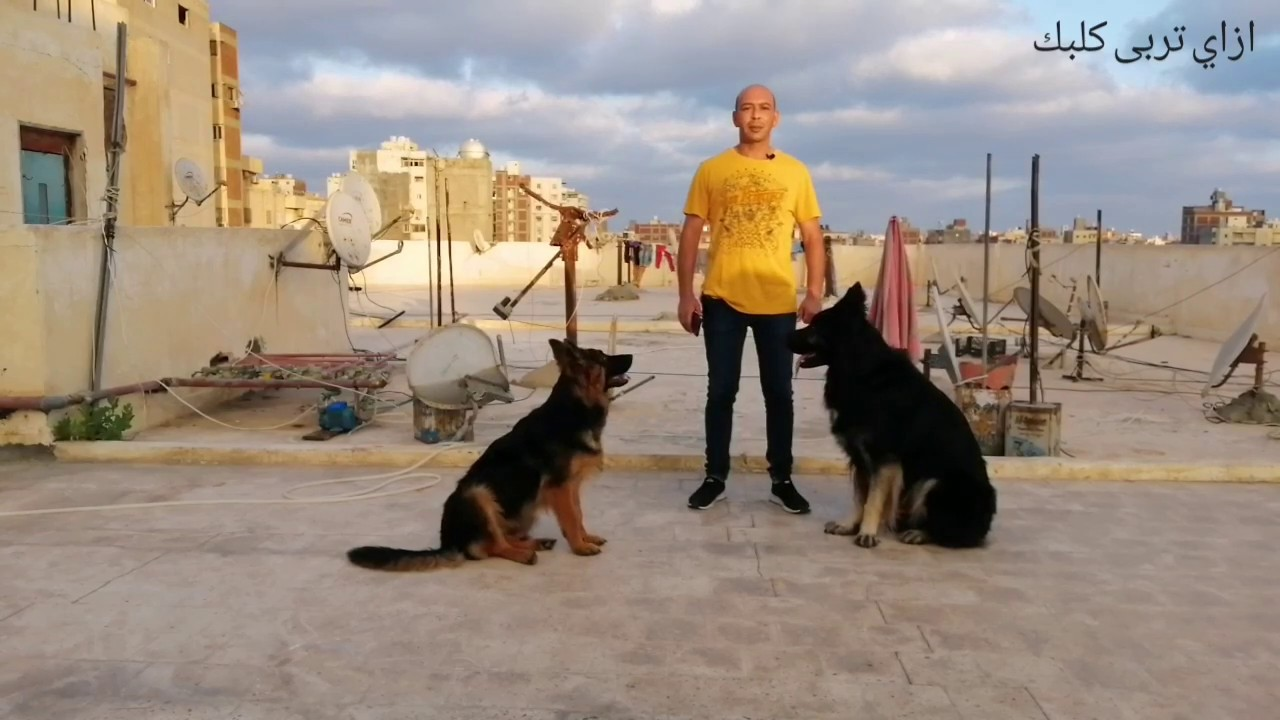 الرد على الأسئلة/هل الكلب لما يتدرب حراسة خطر على الاطفال/المقاس المناسب لبيت الكلب